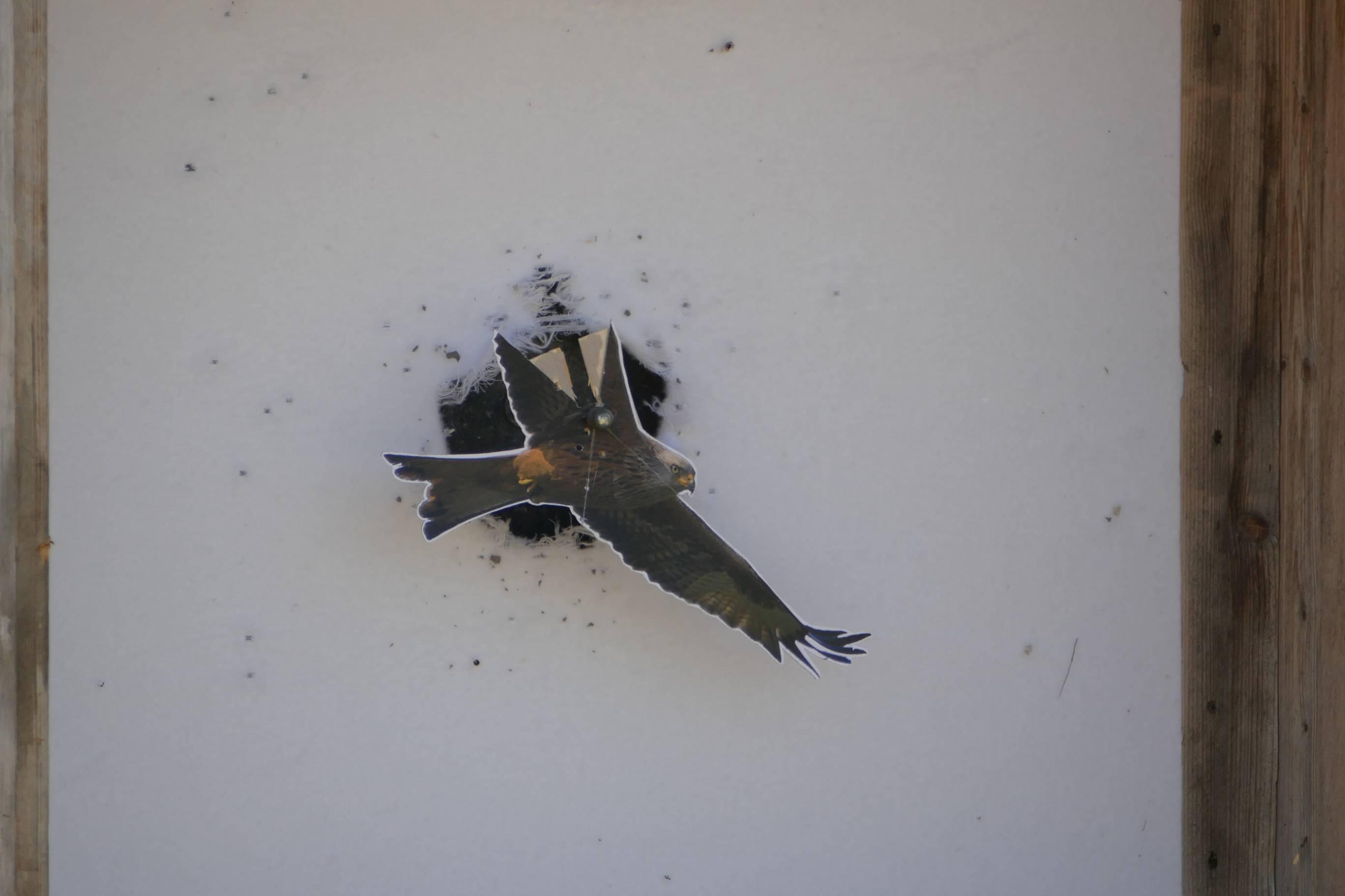 Vogelschuss_2019_009
