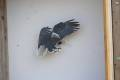 Vogelschuss_2019_052